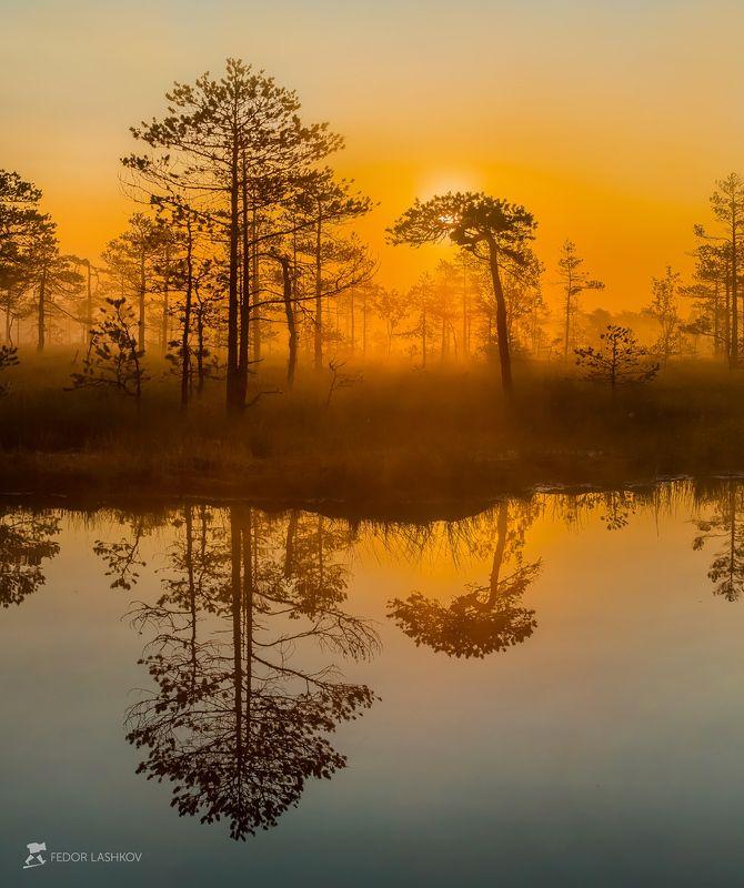 фототур, ленинградская область, деревья, сосна, болото, рассвет, туман, лето, солнце, оранжевый, отражение, озеро. Отражениеphoto preview