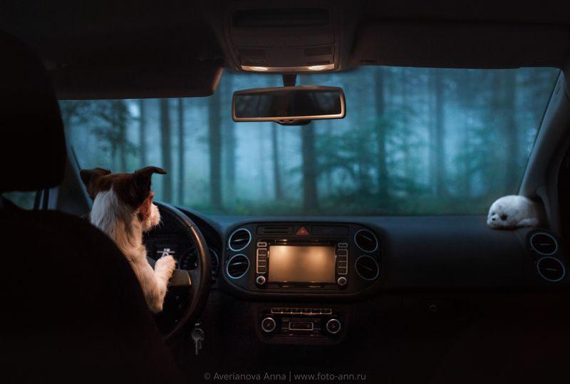 собака, природа, путешествие  Путешественница photo preview