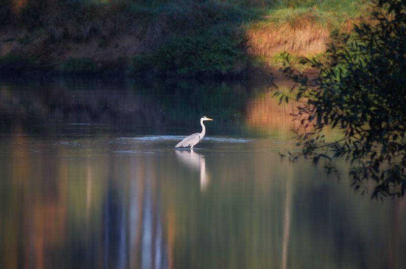 утро, река, Грацияphoto preview