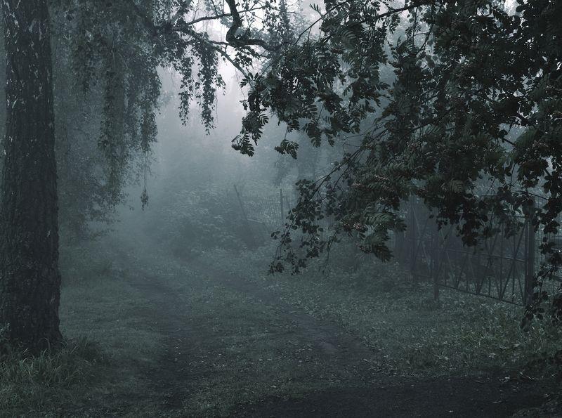 пейзаж,туман,утро,август Лунно-туманная ночьphoto preview