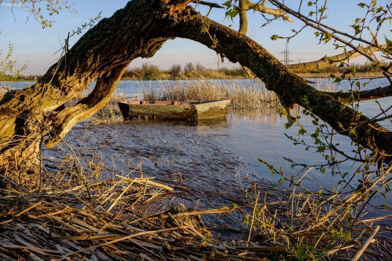 Весенний мотив.photo preview