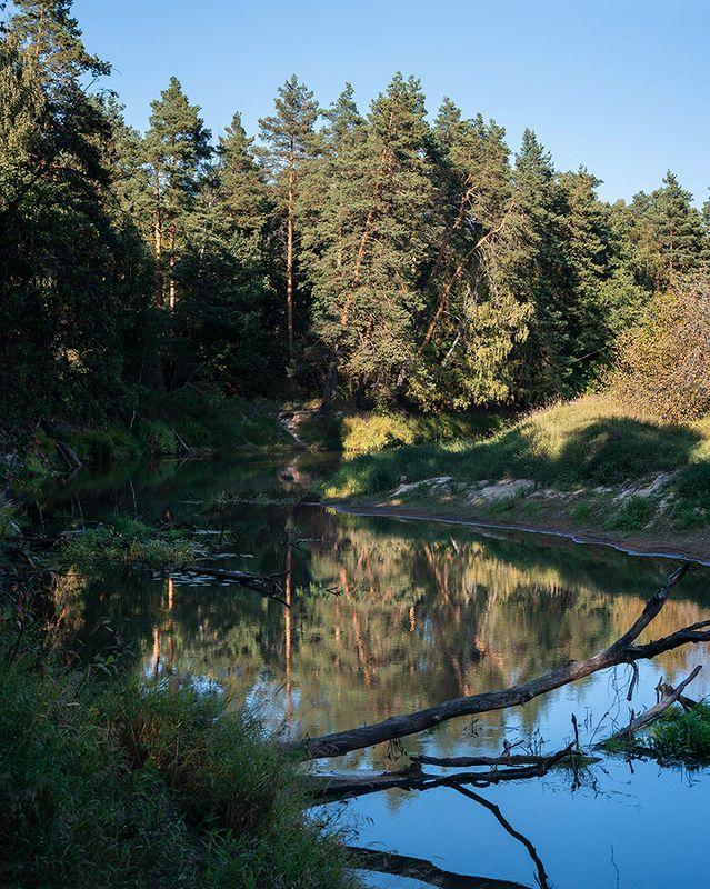 река, лес, лесная река, лето, сосны, берега, высокий берег, мещёра, рязанская область У лесной реки - диптихphoto preview