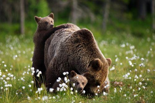 Медвежьи истории - 4