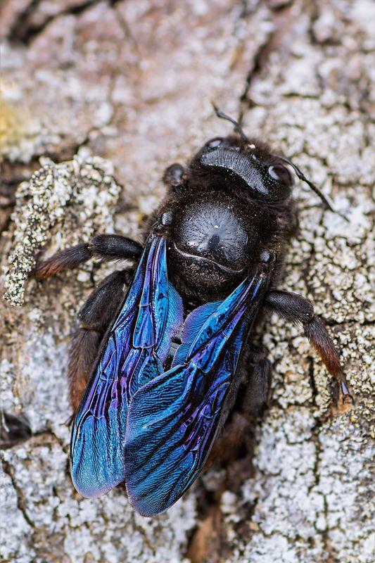 жук,желтый,лист,зелень,свет,насекомое древесная пчелаphoto preview