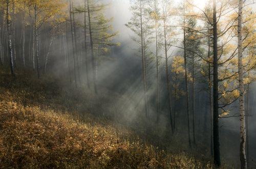 Осенние туманы выходного дня