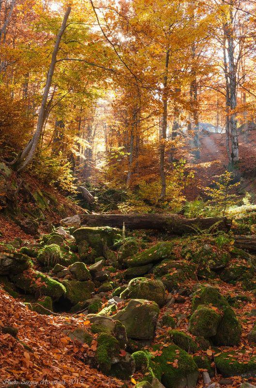 пейзаж, карпаты, осень, красиво, октябрь, вода, листья, деревья, оранжевый Здесь весной бегут ручьи.photo preview