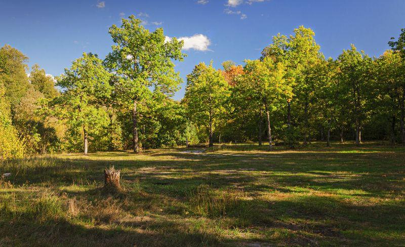nevant60, пейзаж, красота, небо Осень в Брянском лесуphoto preview