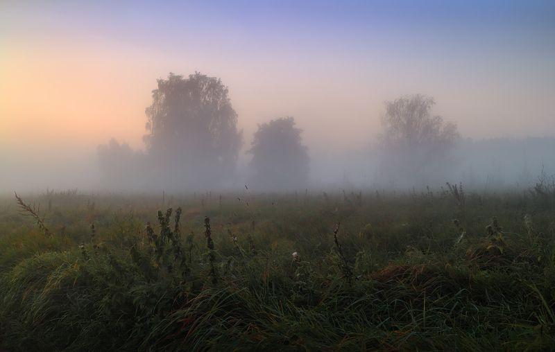 рассвет, туман, поле, деревья, Силуэтыphoto preview