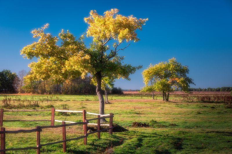 trees light sky blue autumn leaves poland podlasie Autumn impression...photo preview