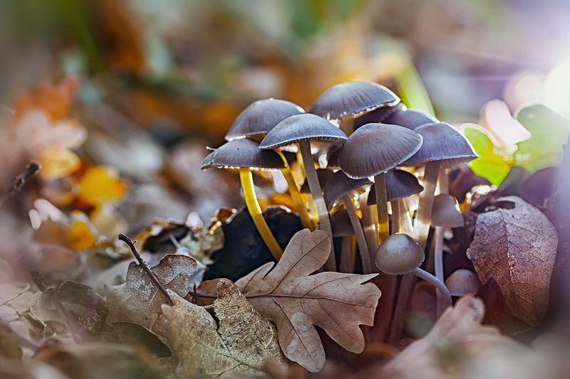 гриб,жук,вода,дождь,хвоя,красный,свет,лес ***photo preview