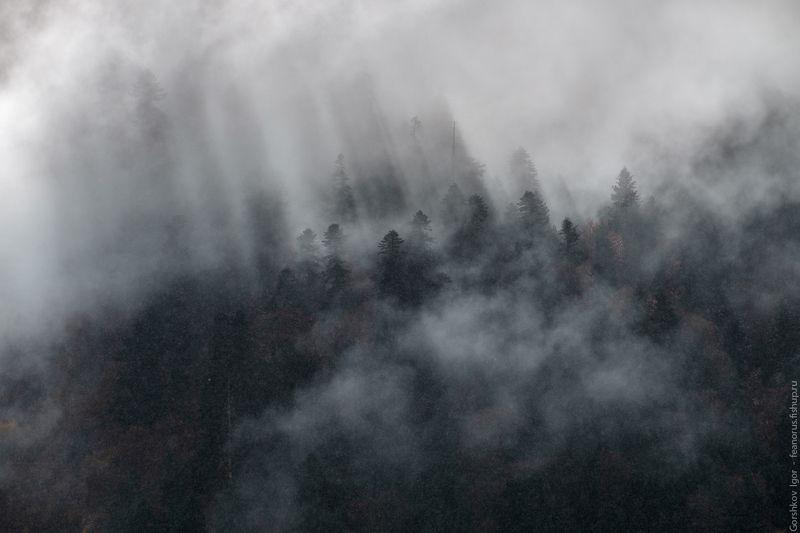 кавказ,домбай,горы,осень,лес,облака,туман,дождь,пейзаж,природа, Туманно-солнечно-дождливые горыphoto preview