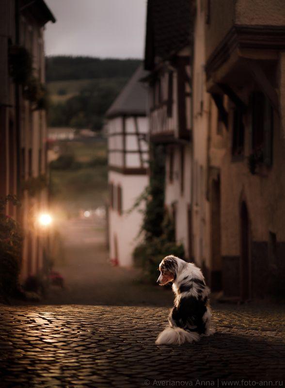 собака, город, вечер, путешествие , животные На улице вечернего городаphoto preview