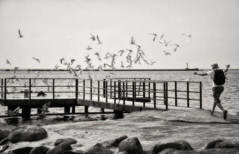 Если птице отрезать руки...photo preview