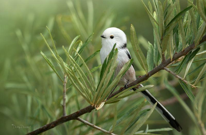 природа, лес, животные, птицы Осенний снеговичокphoto preview
