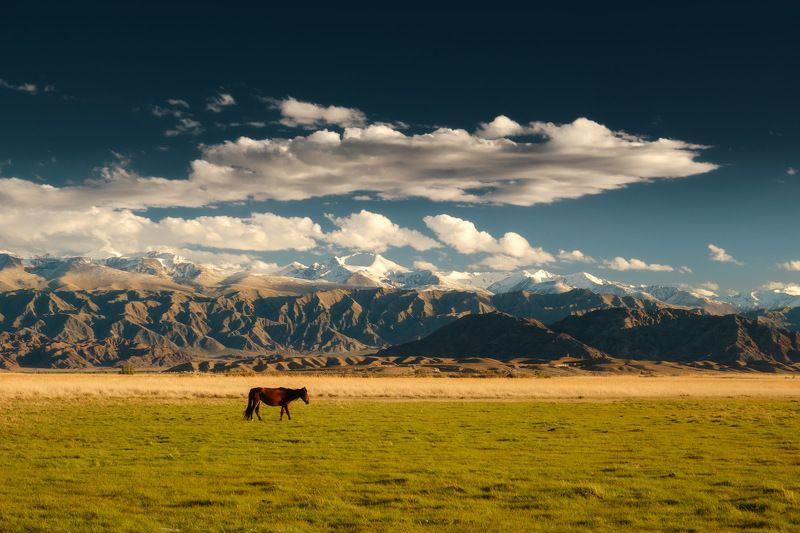 киргизия, кыргызстан, азия, горы, луг, скалы, пейзаж, весна, ущелье, джайлоо, пастбище, конь, лошадь Один в полеphoto preview