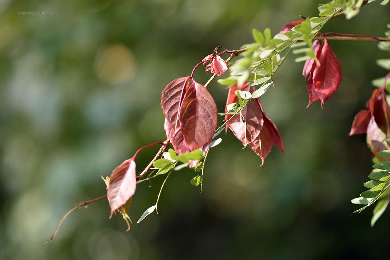 Осени штрихи..photo preview
