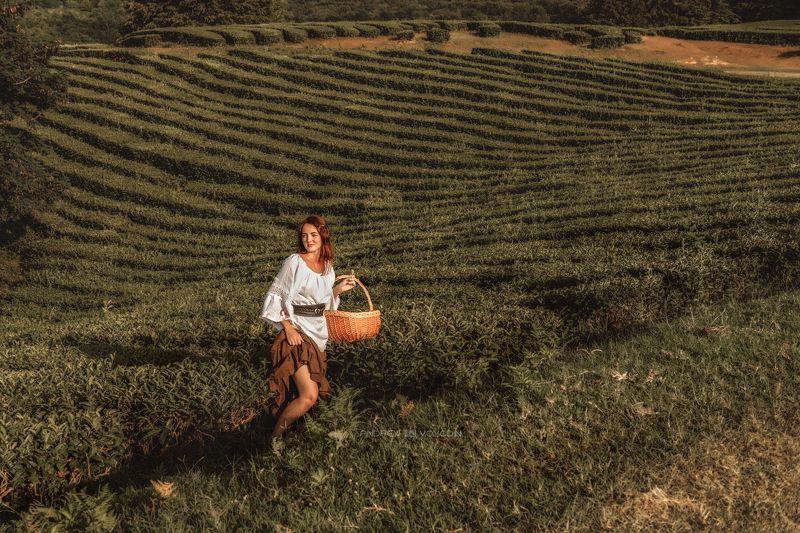 девушка чай корзина селянка плантация закат собирает Сборщица чаяphoto preview