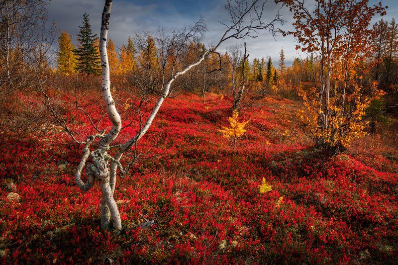 Осень на Ямалеphoto preview