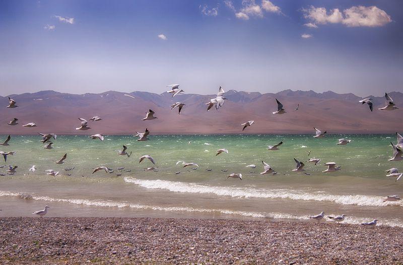 кыргызстан, горы, сон-куль Гонимые ветромphoto preview