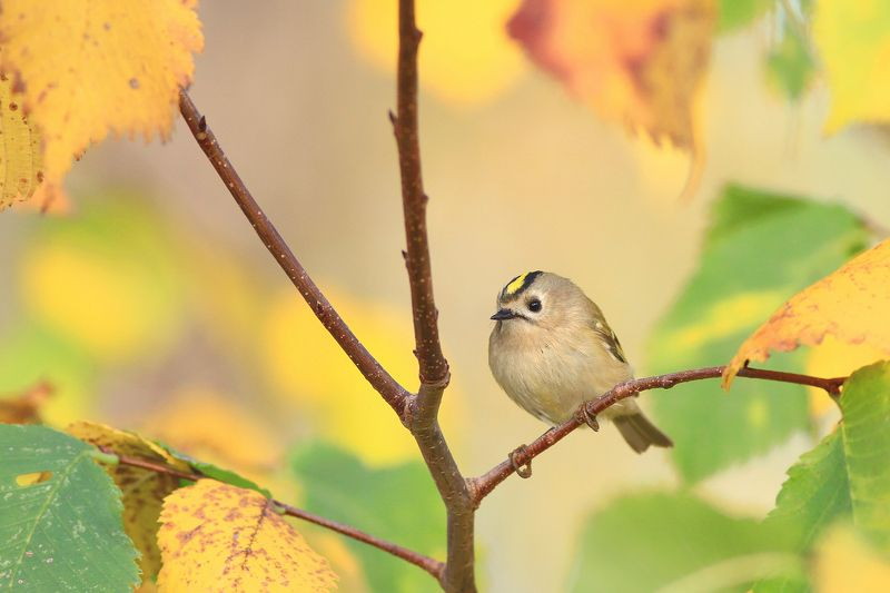 bird,autumn,tree,color,leaves,birds,beauty,colorful,scenery Bird from a fairy talephoto preview