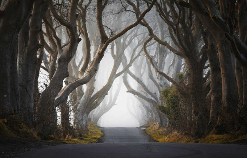 Mystical Roadphoto preview