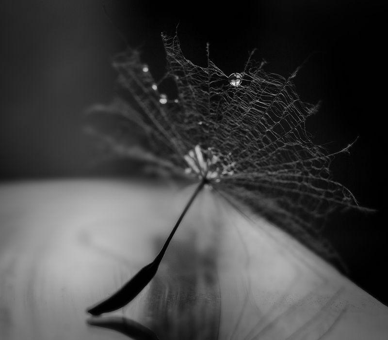 дырявый зонтик*photo preview