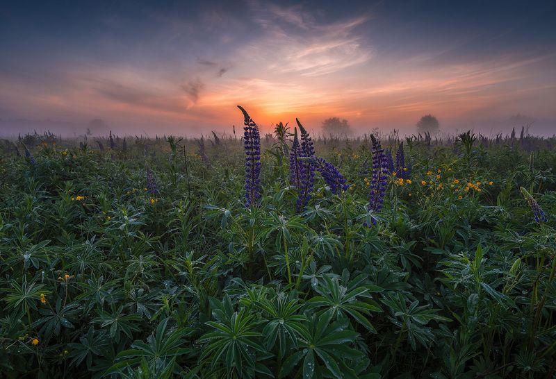 пейзаж, рассвет, туман, утро, россия, природа, филипповское, лето, цветы Летние зарисовкиphoto preview