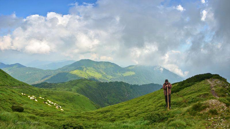 карпаты, горы, мармароссы, овцы, небо, облака, пастух Вівчар Іванphoto preview