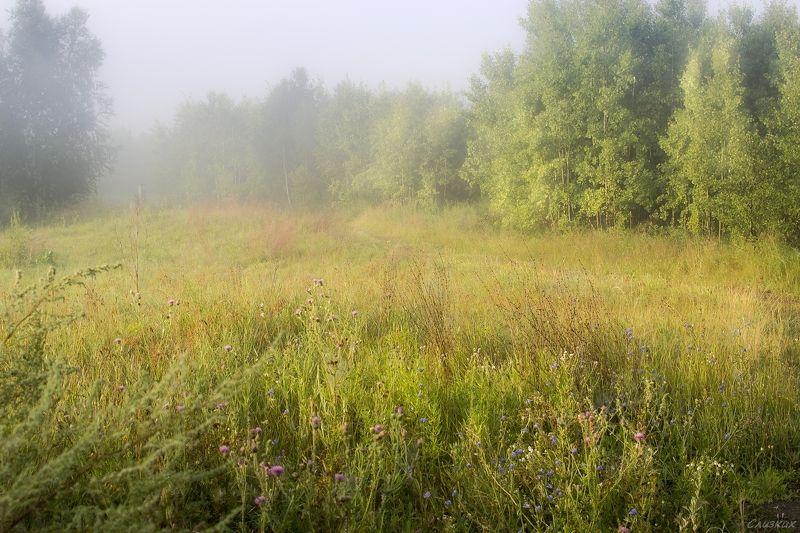 пейзаж,туман,утро,краски,август Утро  туманноеphoto preview