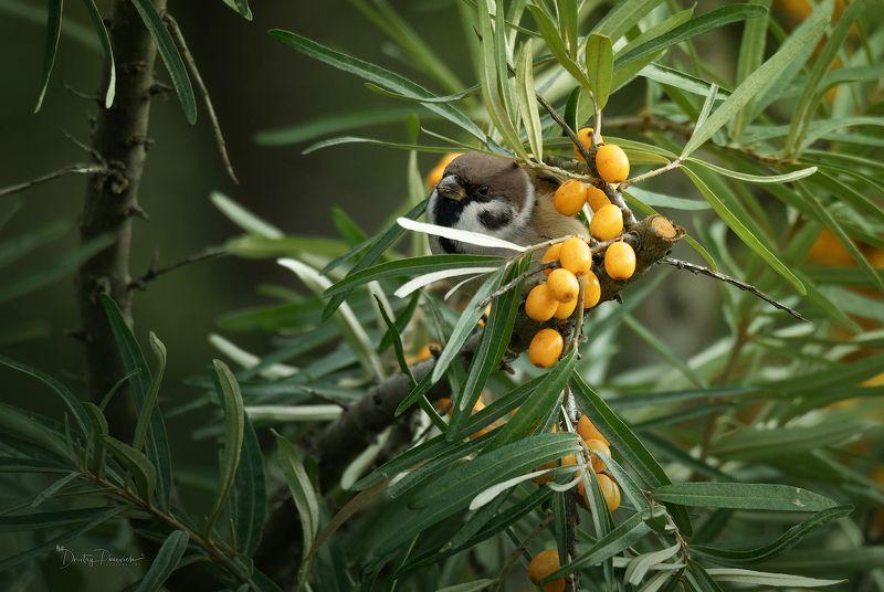 природа, лес, животные, птицы Охранник урожая ;)photo preview
