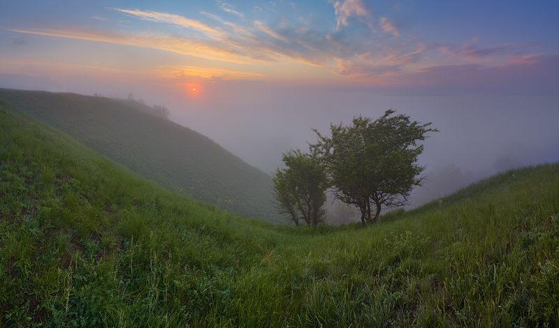 туман, утро, долина, холмы, рассвет, солнце, прохлада, пейзаж, панорама, облака, свет, природа, morning, fog, sunrise, sky, clouds, light, misty, mood, foggy, valley, hills, landscape, panorama, nature поднимаясь над пеленой тумана ..photo preview