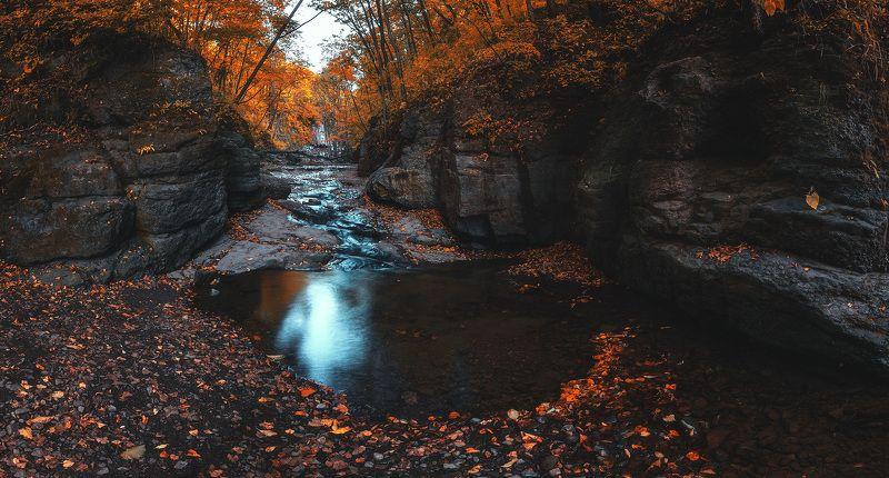 осень, панорама, лес ***photo preview
