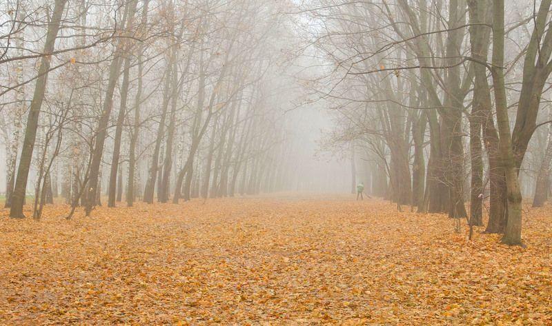 осень парк цпкио тула Не пришла, а обрушилась осень...photo preview