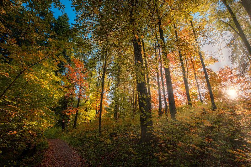 середниково, осень,тропинка, лес, цвета, солнце, золото, бабье лето, свет, листва, желтый Осенняя тропинкаphoto preview