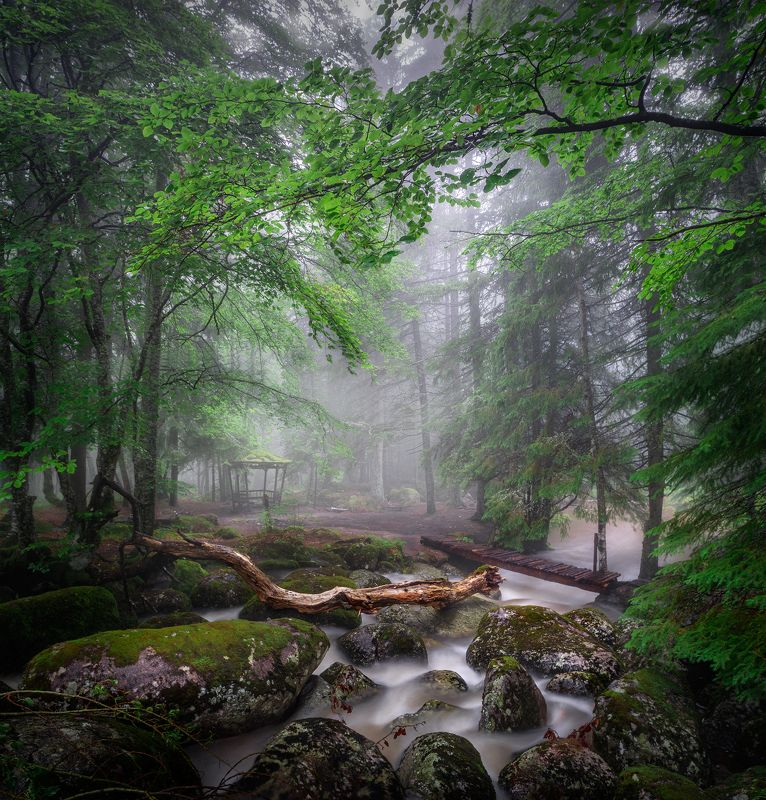 landscape nature scenery forest wood mist misty fog foggy mountain vitosha bulgaria туман лес Once upon a time in the woodsphoto preview