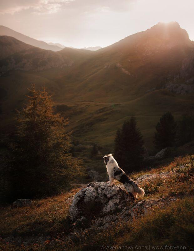 собака, горы, природа, закат Доломиты photo preview