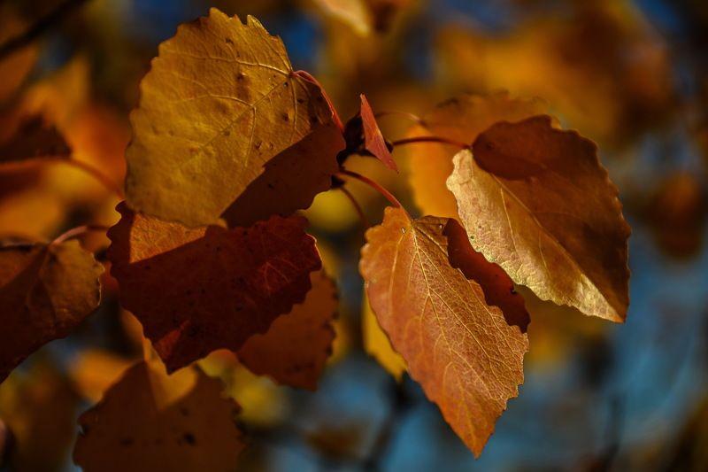 осень Золотая  осеньphoto preview