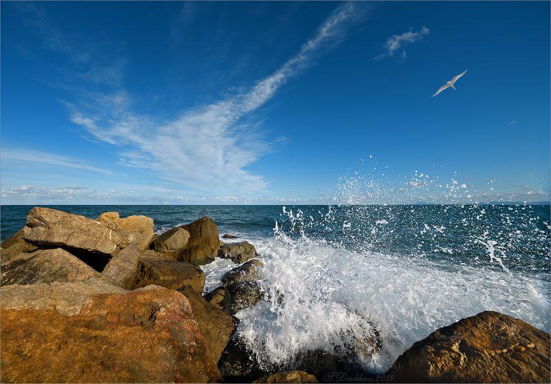 небо, море, чайка, вода, облака, волны, закат Низкое солнцеphoto preview