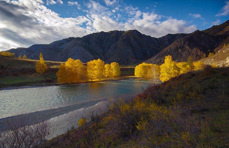 горы, осень, деревья, река, вода, чуя, чуйский, тракт, вечер, свет, желтые Осенним вечеромphoto preview