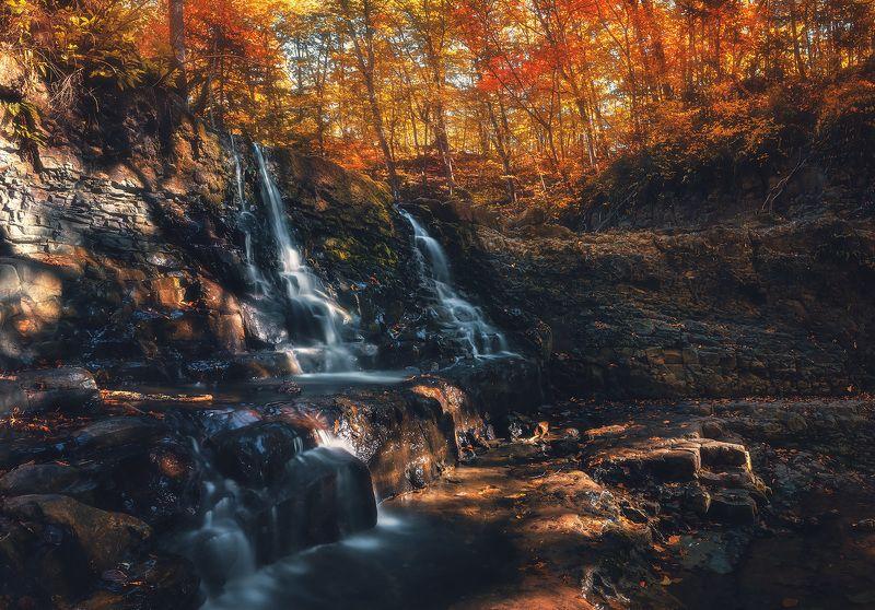 осень, лес ***photo preview