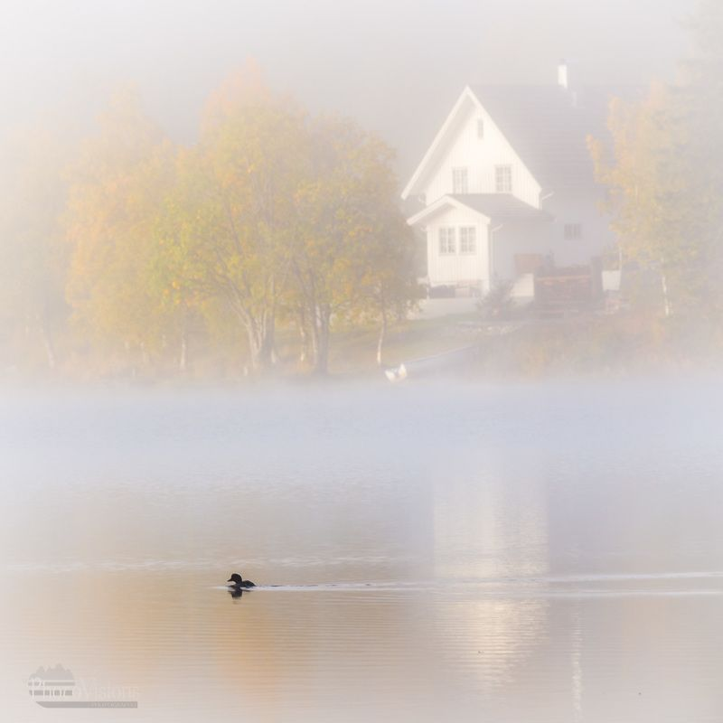 fog, foggy, autumn, autumnal, duck, white, morning, norway, norwegian, landscape, moody, Duck in the fogphoto preview