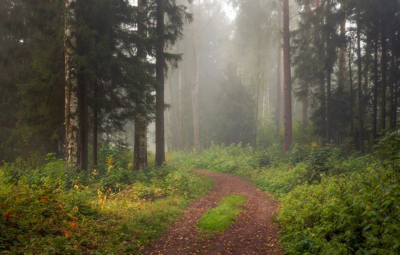 питер, павловск, павловскийпарк, павловский, осень, туман Сентябрьский парк. . . .photo preview