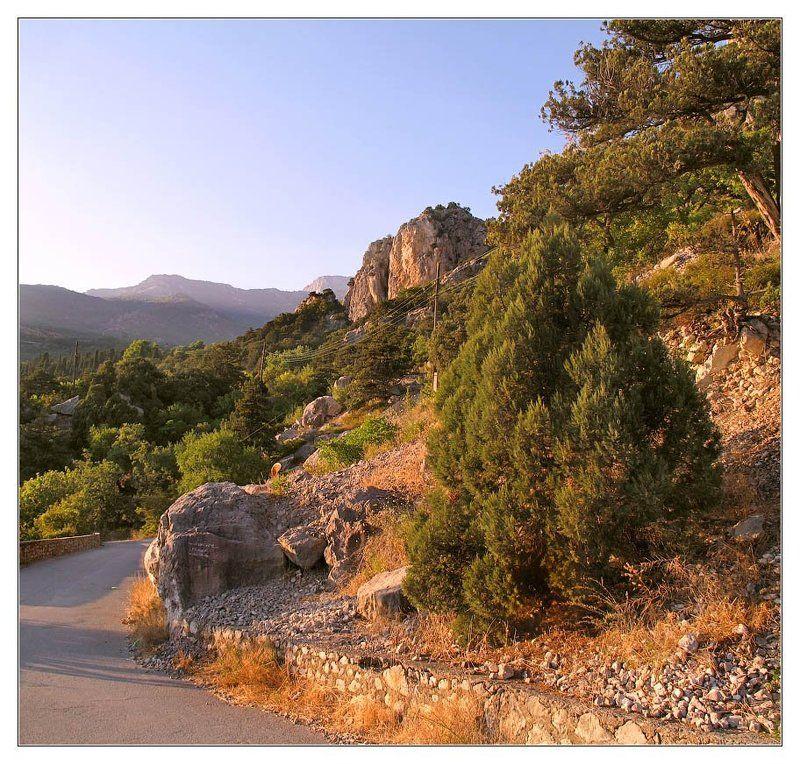 дорога, горы, сосны Крымская обыкновеннаяphoto preview