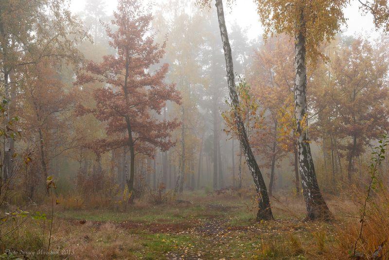 пейзаж, природа, лес, октябрь, осень, туман, утро, украина В осенней дымке туманаphoto preview