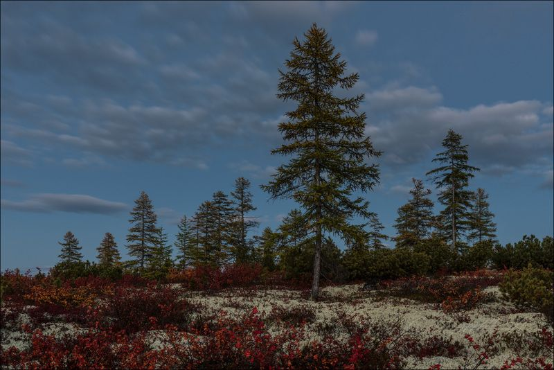 Осень на Джекеphoto preview