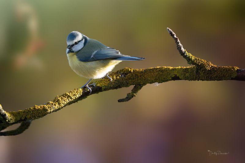 природа, лес, животные, птицы Последние теплые денькиphoto preview