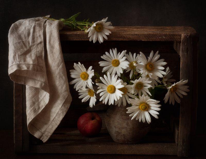 натюрморт,цветы,хризантемы,левкантемелла,осень левкантемелла...photo preview