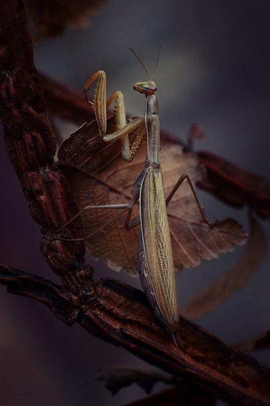 осень вечер богомол Осеньphoto preview
