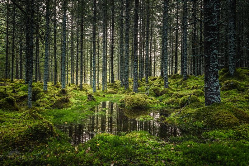 forest, trees, green, landscape, moss, mossy, reflections, woods, woodland, Enchanted forestphoto preview