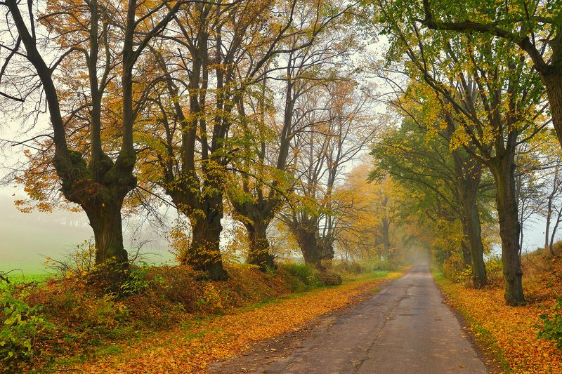 autumn road jesien leavs trees tree path mist fall dranikowski poland droga Autumn roadphoto preview